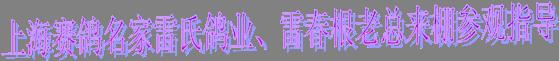 上海赛鸽名家雷氏鸽业、雷春根老总来棚参观指导