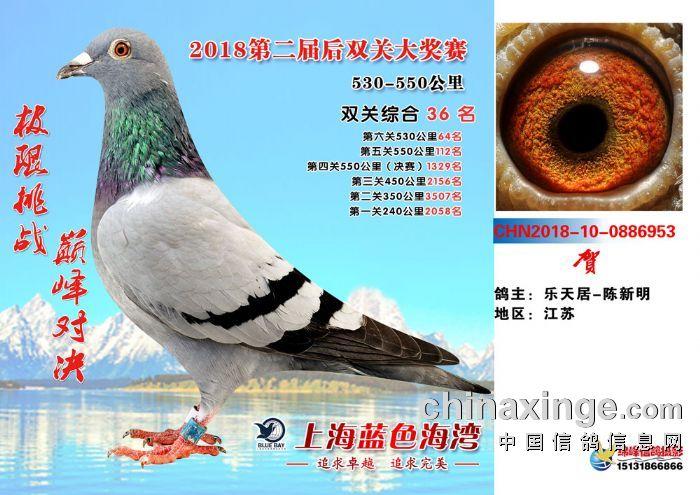 据中华信鸽公布2015年数据_赛鸽成绩查询